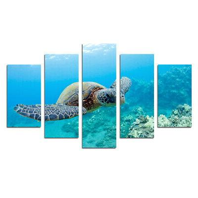 sea turtles seascape animals pictures wall art